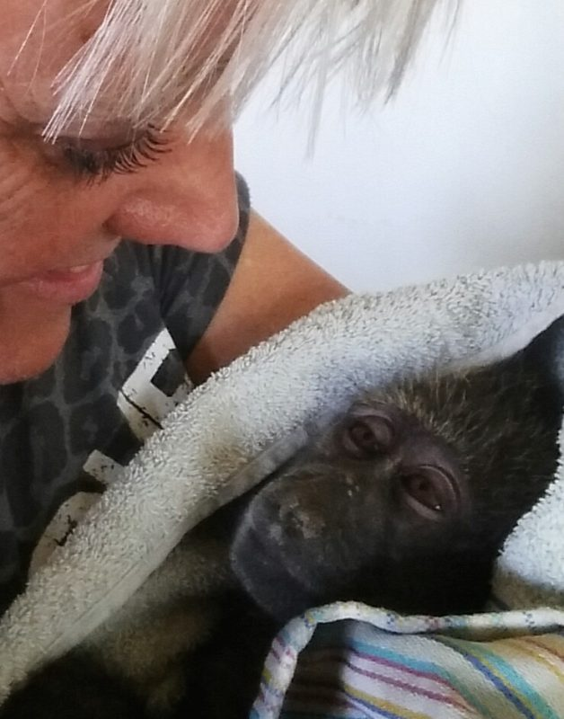 Wilde dieren - ZaZoe Xperience - ziek baviaantje