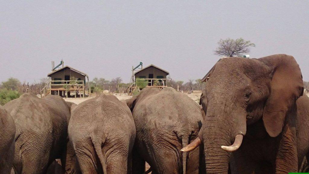 Wilde dieren - ZaZoe Xperience - olifanten wel heel dichtbij