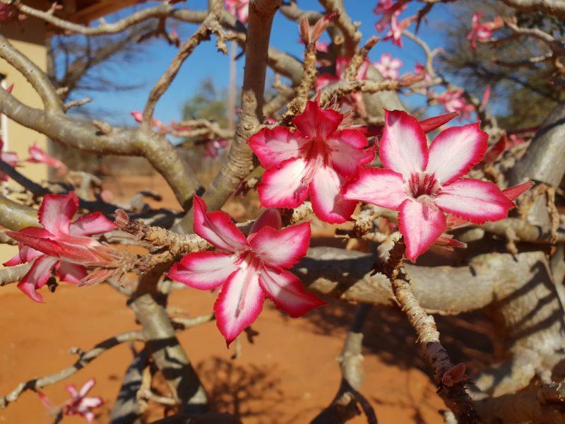Rondreis ZaZoe Xperience - bloemen 002