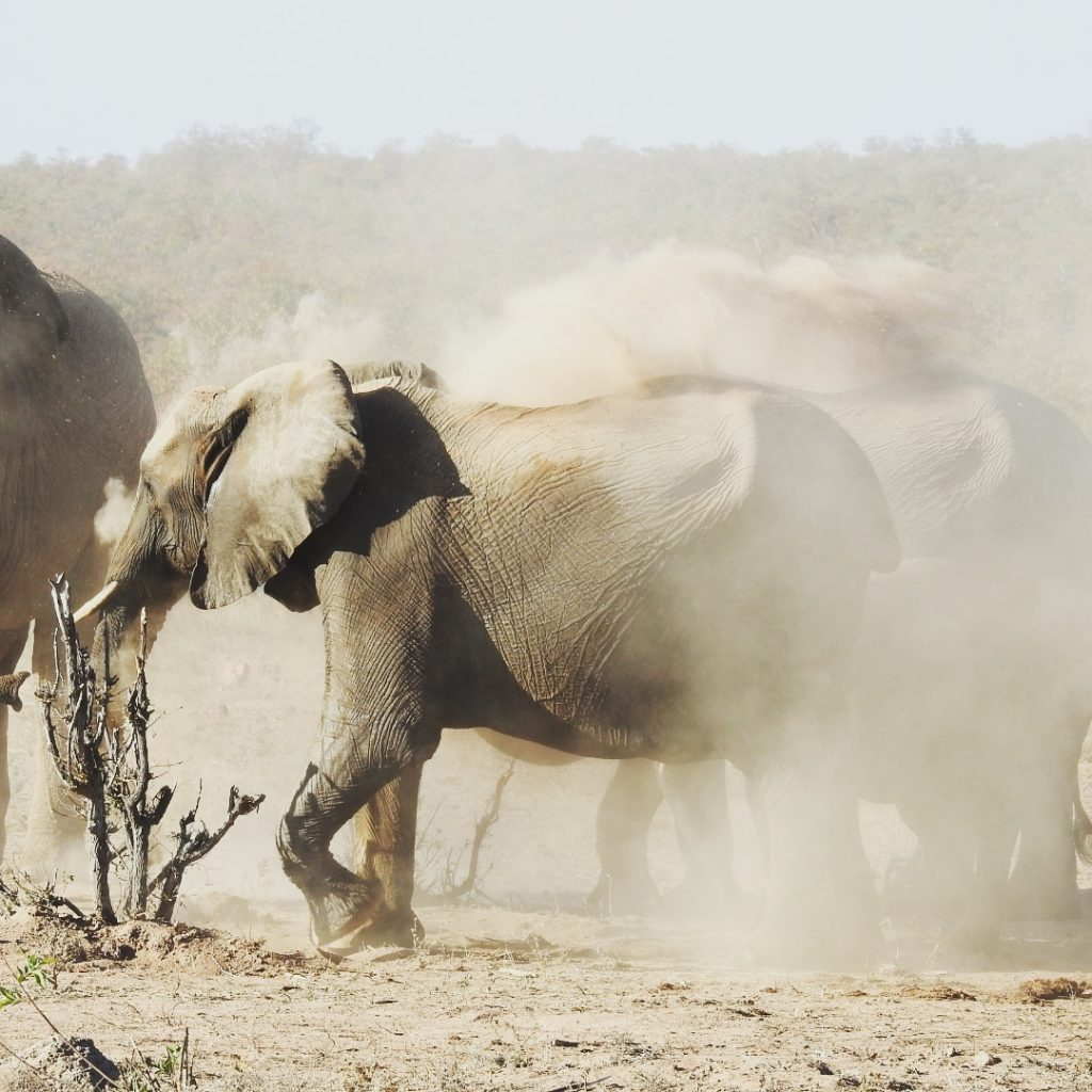 Wilde dieren - ZaZoe Xperience - olifanten zandbad