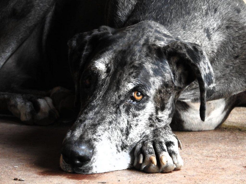 Honden - ZaZoe Xperience - Moyo