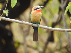 Vogels - ZaZoe Xperience - bijeneter