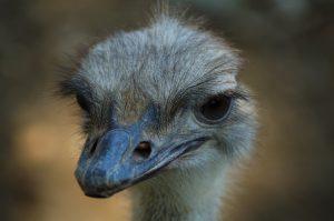 Vogels - ZaZoe Xperience - struisvogel